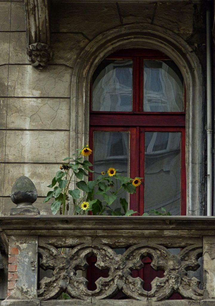 Słoneczniki - Piastowska 34